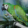Bee-Bop, a Severe Macaw, is looking for a new home.