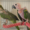 Cricket, a Jenday Conure, and Jake, a Quaker Parrot. Cricket passed away.