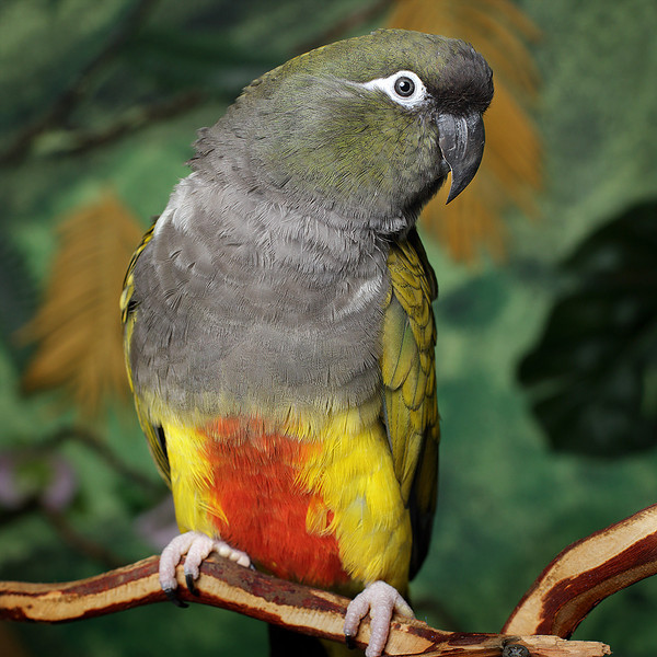 General, a Patagonian Conure, has a new home.