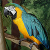 Merlin, a Blue-and-Gold Macaw, has a new home.
