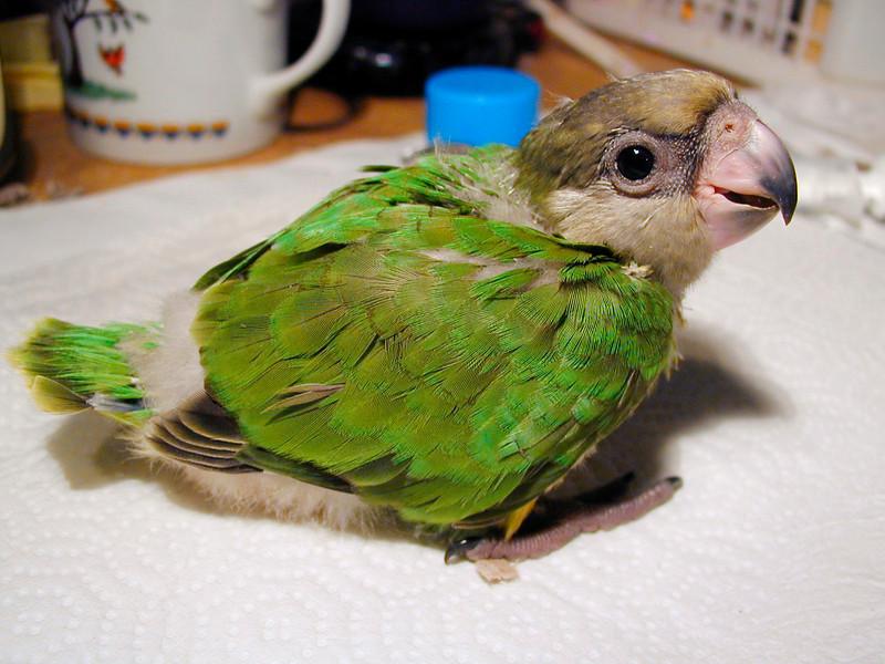 Senegal Baby