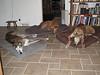 Left to Right:  Buck, Peekaboo Pup & Jammer