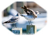 This gull is in the process of shaking its wings; view in the largest sizes to see the details.