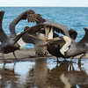 Brown Pelicans (Pelecanus occidentalis) - Bal Harbour, Florida