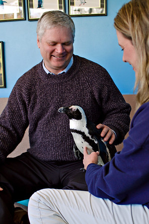 Penguin Contact