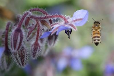 Honey Top
