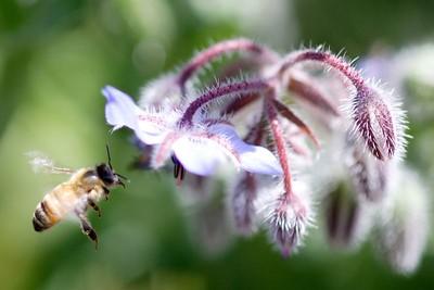 Honey Hover