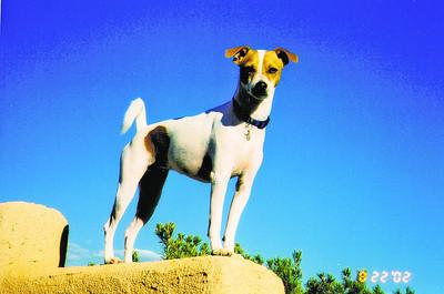 #19 Pet: Cleo Owner: Maria Stennis