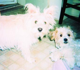 #7 Pet: Denali & Pup-Pos Owner: Alex & Lynda Romero