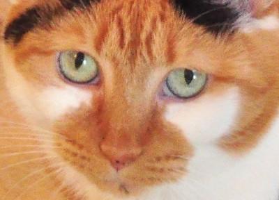 Freckels4