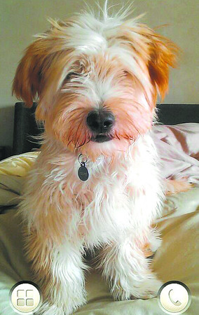 #24 Pet: Cosmo Owner: Karlene Green