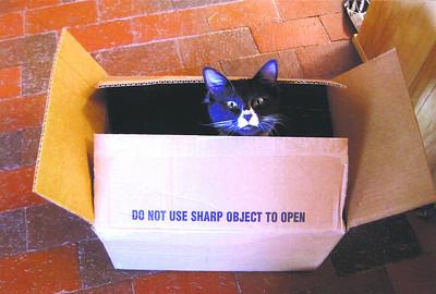#9 Pet: Figaro Owner: Bonnie Garr