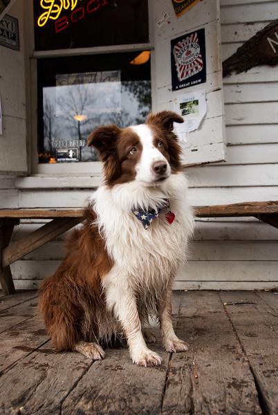 Lucy Lou, Mayor of Rabbit Hash