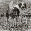 Bert the dog. Photo 5.