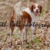 Bert the dog. Photo 6.