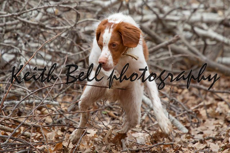 Bert the dog. Photo 4.