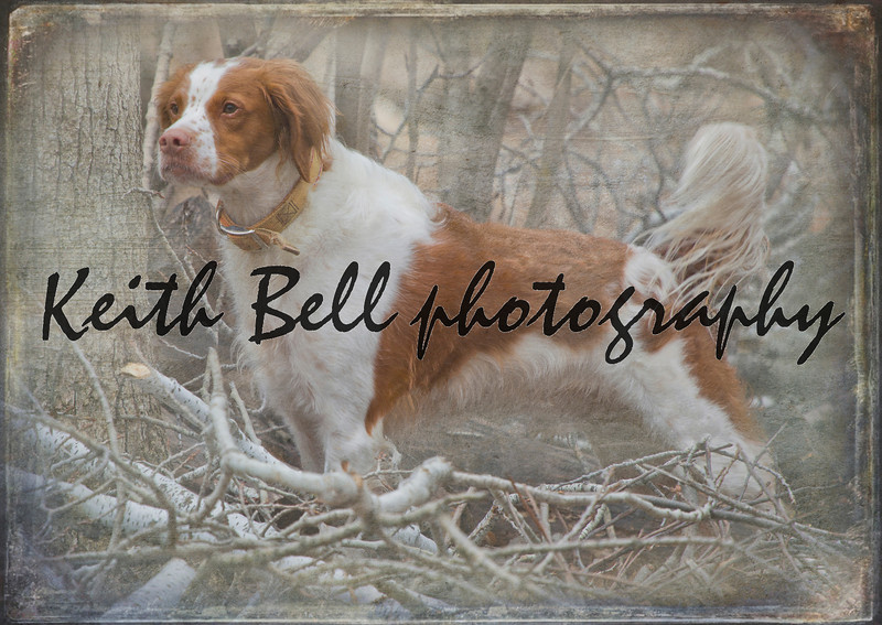 Bert the dog.  Textured and layered to give the look of an antique postcard.
