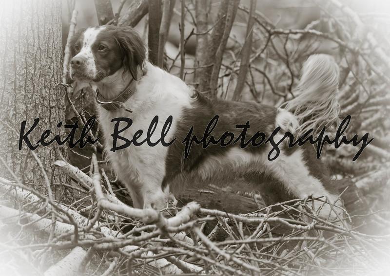 Bert the dog.  Photo 3.