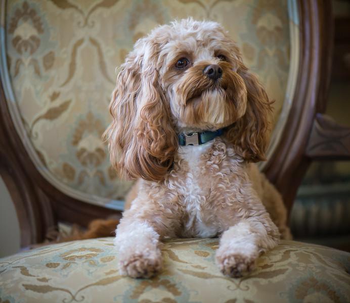 Nelson Posing Pretty