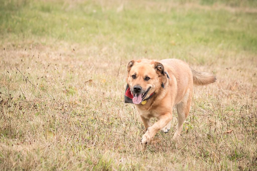 IMAGE: https://photos.smugmug.com/Animals/Pets-and-Livestock/Cody/i-dXsW7qv/0/279cf76a/XL/IMG_1862-XL.jpg