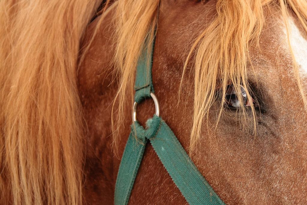 IMAGE: https://photos.smugmug.com/Animals/Pets-and-Livestock/Livestock/i-LJmmLkH/0/44151f7d/XL/IMG_7447-XL.jpg