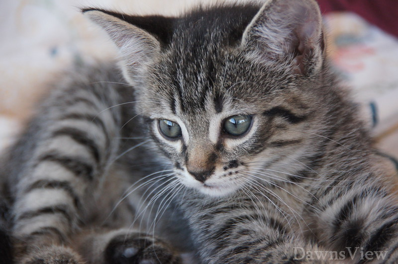 Kitten at 6 weeks old.  Oct 22, 2011