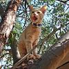 Sunny in tree