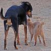 Lucky dog & Sunny