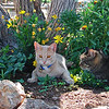 all three cats outside in flowers