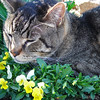 Rascals in April 2010, around 12 years old......