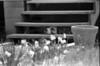 (9Feb13)<br /> <br /> a warm summer's day, circa 1980.<br /> <br /> nikon fe, 50mm f/2, ilford fp4