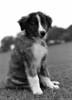 """(4Feb13)  scanned from film, circa 1980, grendel as a pup.  <a href=""""http://carpelumen.smugmug.com/Photography/2012/February12/21327013_KXGHmR#!i=1699823067&k=4fNshn5"""">one year ago.</a>  nikon fe, 50 f/2, ilford fp4"""