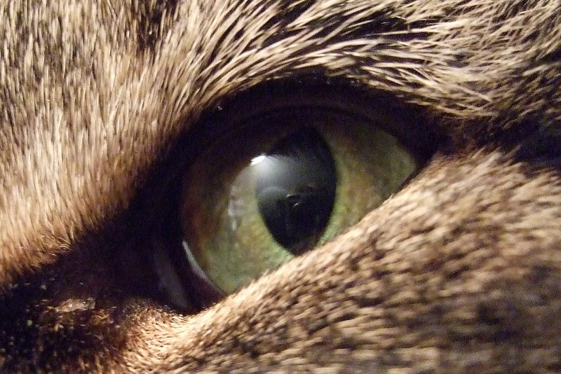 Boo's eye