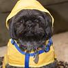 SRV1402_2351_Frankie_Raincoat