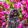 SRb1606_5469_Frankie_Roses