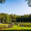 SRd1709_3434_Horses