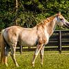 SRd1709_3435_Horses