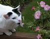 flower child jake