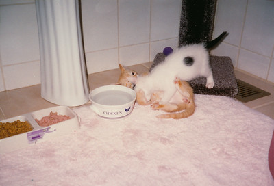 Jake and Joey 1997
