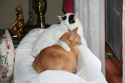 Jake and Joey 2008