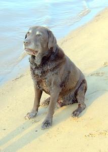 Judy's Dogs 13