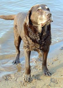 Judy's Dogs 10