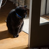 (13Nov13)<br /> <br /> sometimes, he just has to be a cat.<br /> <br /> he had to come. then, he had to stop just in the way of closing the door.<br /> <br /> i guess i can't blame him. the sunbeam looked comforting.<br /> <br /> f/5.6, 1/125s, iso 500.