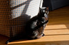 3Feb13<br /> <br /> finding a place in the sun.<br /> <br /> f/10, 1/160s, iso 400.