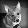 Lucy Pauses for a Portrait