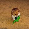 Frizbee Dog_20110827_081