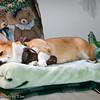 Sleeping Beauty_20120217_011