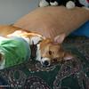 Sleeping Beauty_20120217_008