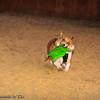 Frizbee Dog_20110827_115