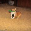 Frizbee Dog_20110827_109